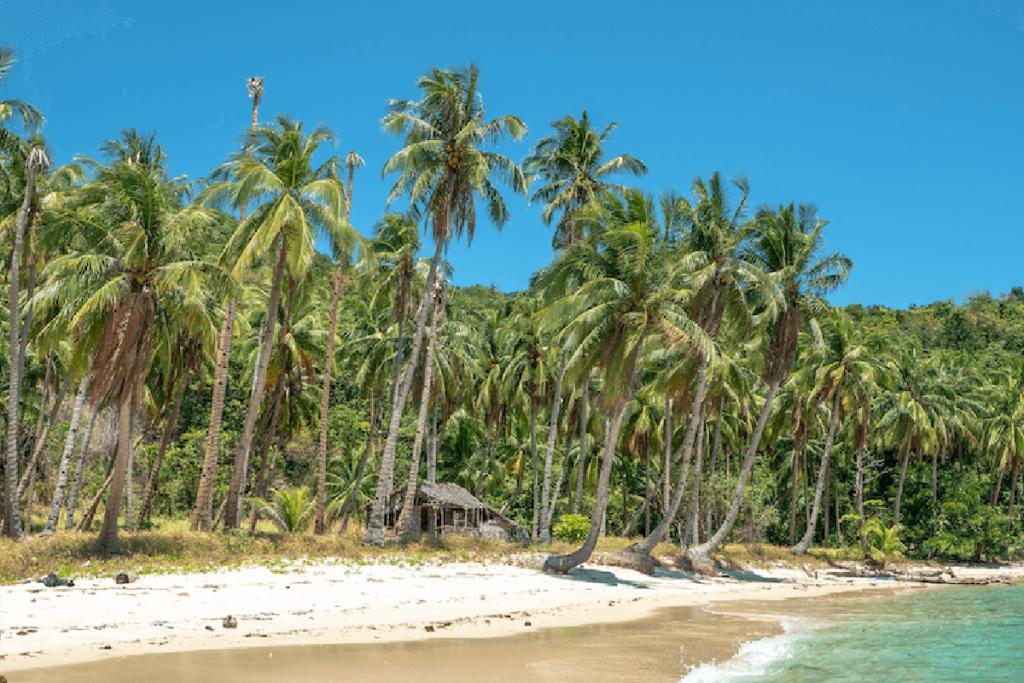 A beach with palm trees. Photo credit- Hakan Tas, Unsplash